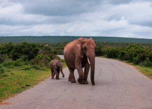 Foto di Elefanti
